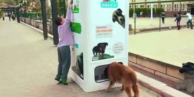 Machine Feeds Stray Dogs In Exchange For Recycled Bottles