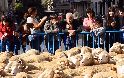 2,000 sheep herded through Madrid to celebrate ancient farming routes