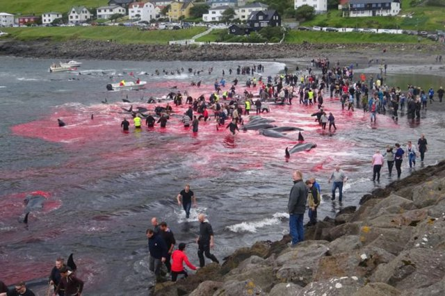 The sea was frying from the blood of whales